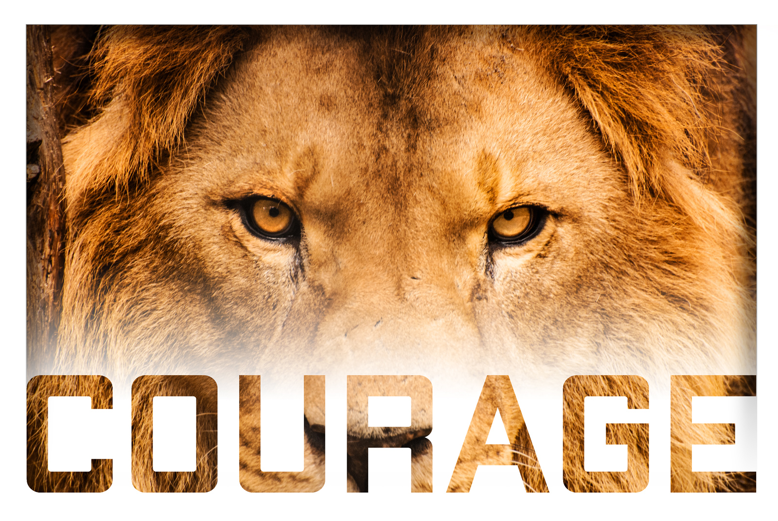 Character Education: Courage